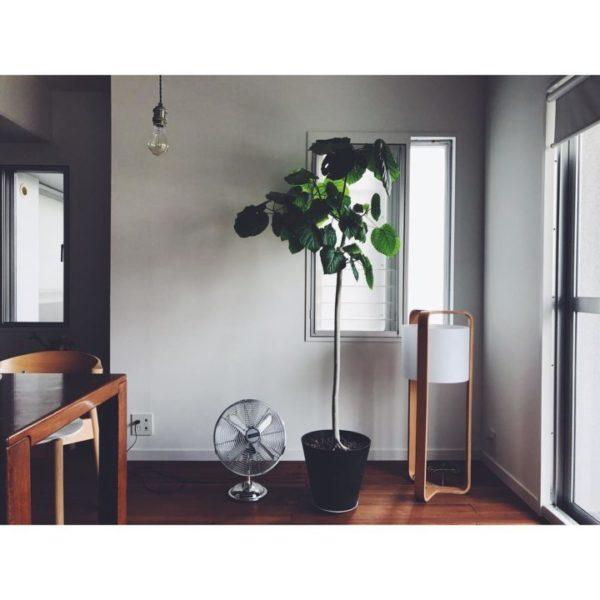 大きい観葉植物6