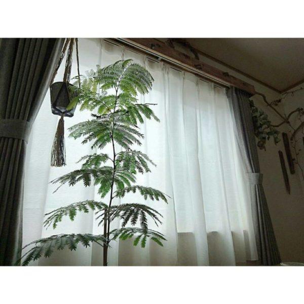 大きい観葉植物14