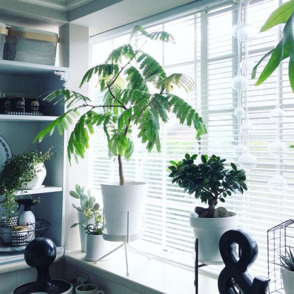 大きい観葉植物15