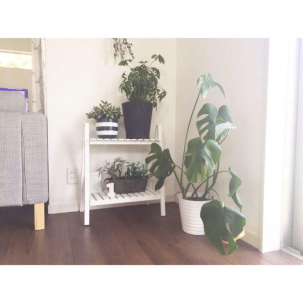大きい観葉植物28
