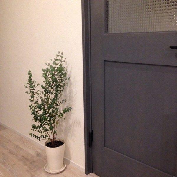 大きい観葉植物32