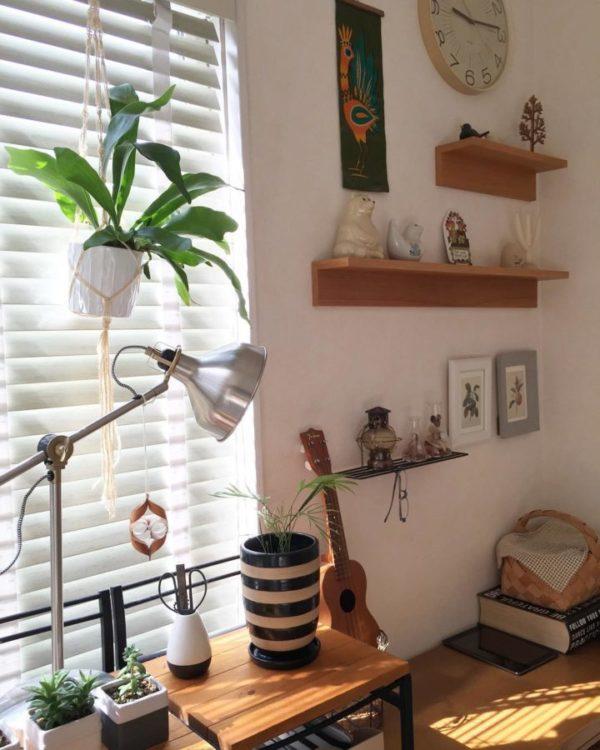 小さい観葉植物12