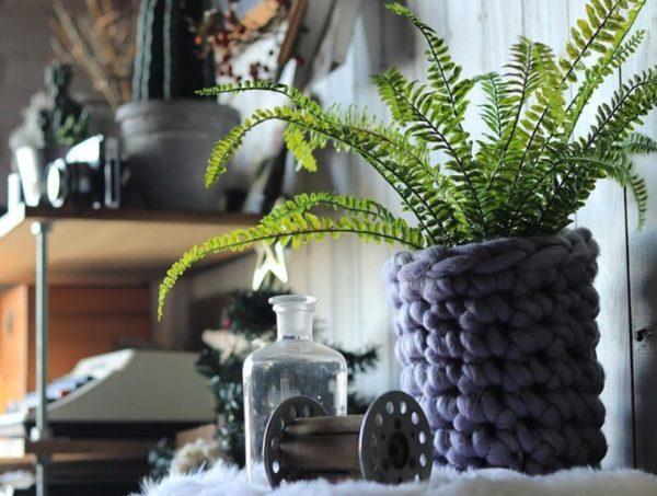 小さい観葉植物22
