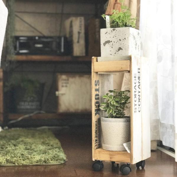 小さい観葉植物23