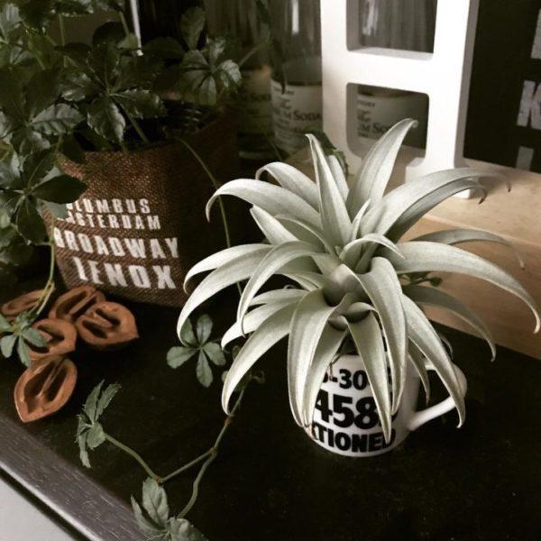 小さい観葉植物24