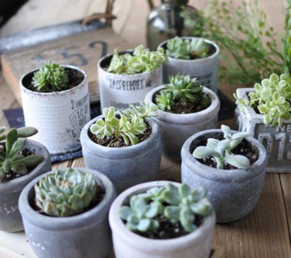 小さい観葉植物30