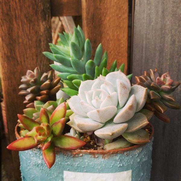 小さい観葉植物小さい観葉植物31
