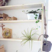 土のいらない不思議なおしゃれ植物♡エアプランツを素敵に飾ろう!