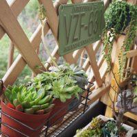 お部屋にグリーンを!観葉植物でお部屋に癒しとすてきなインテリア