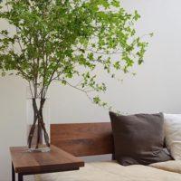 好きな観葉植物を置いて、部屋をイメージチェンジしましょう!