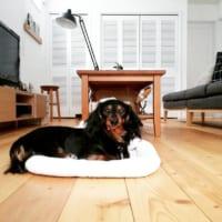 犬と暮らす幸せなインテリア実例20選♡犬用アイテムをプラスした部屋作りは統一感が大切!