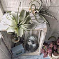 植物をおしゃれに楽しむインテリア特集♡植物の素敵な飾り方アイデアをご紹介☆