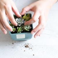 可愛いのにお手入れ簡単!魅力たっぷり多肉植物のインテリア10選