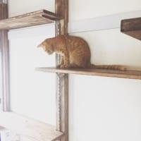 猫と暮らしたい方必見!猫と暮らす際のおすすめインテリア・アイディアをご紹介☆