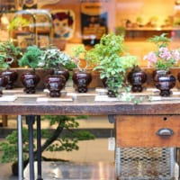 日本の伝統が海外で人気!「BONSAI(盆栽)」の魅力をご紹介