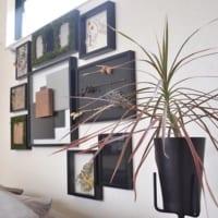 お部屋作りには華奢な緑がぴったり!植物を取り入れてぬくもりのあるお部屋作りを♪