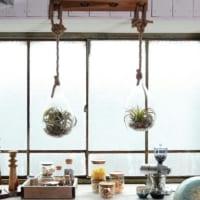 ガラス×観葉植物の素敵なインテリア☆ガラスとグリーンの繊細でナチュラルなハーモニー♪