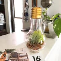 チャレンジしたい☆植物×インテリアの素敵な組み合わせ実例20選!