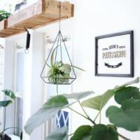 観葉植物を立体的にレイアウト♪ハンギンググリーンで空間をオシャレに彩る方法!