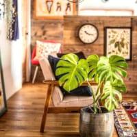 グリーンのある生活☆人気の観葉植物10種とエアプランツの特徴と実例をご紹介♪