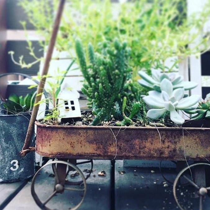 話題の多肉植物ガーデンをDIYしよう6