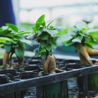 インテリアに「お洒落グリーン」を!人気の観葉植物5選