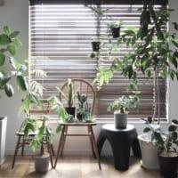 お気に入りの観葉植物を長持ちさせたい!育て方のポイント&インテリアコーデ