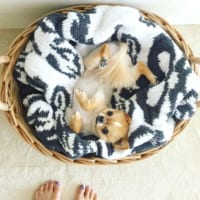 犬と一緒に暮らす家。犬も楽しく過ごせる、おしゃれなインテリア実例