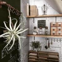 観葉植物を置く場所がない?吊るしたり掛けたり、観葉植物を楽しむアイデア集☆