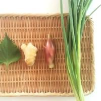 水耕栽培で食費を節約したい!再生できるスーパーの野菜、どんなのがあるの?