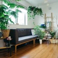 お部屋にグリーンがある暮らし!インテリアに観葉植物を素敵に取り入れる方法