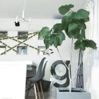 「花言葉」を意識して飾る!ポジティブで素敵な意味を持つ観葉植物をご紹介♪