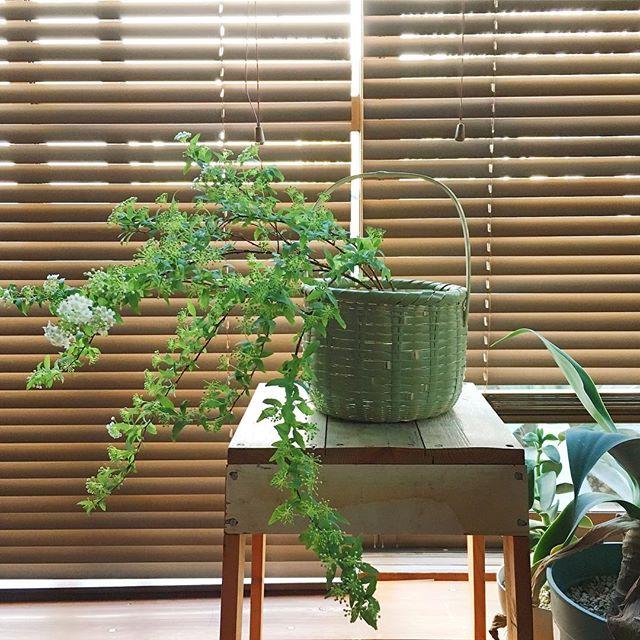 観葉植物を入れてインテリアのアクセントに5