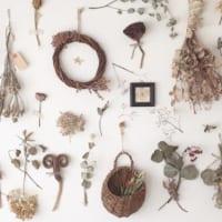 貼る、吊るす、置く。植物を使った3つのコーディネート方法で、いつもの部屋がセンスアップ!