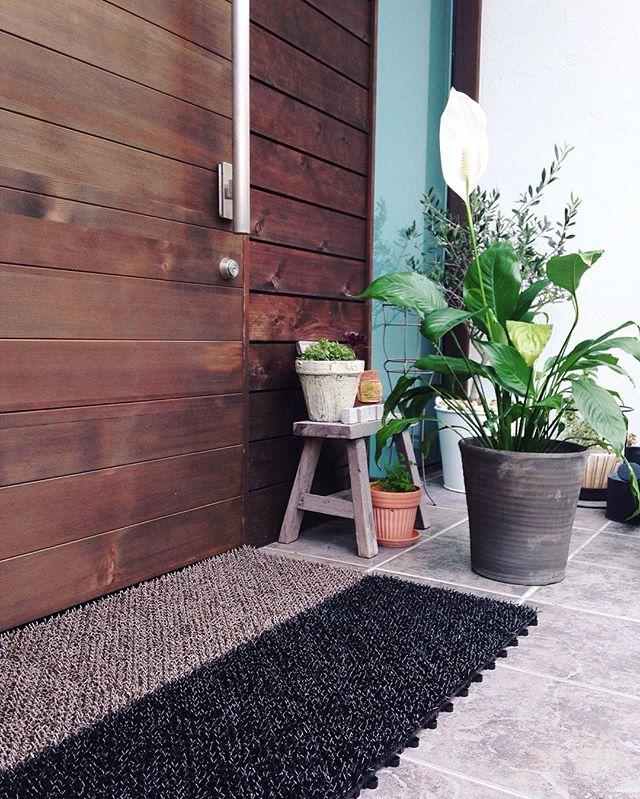ベランダでも室内でも育てられる観葉植物3