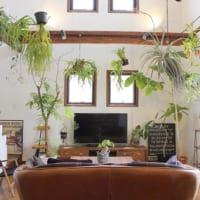 一つ置くだけでとっても簡単♫大きな鉢植えでラグシュアリー空間に早変わり!