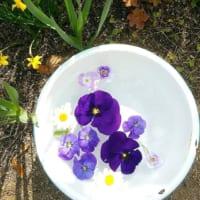 自分で育てた花を飾ろう♪小ぶりな植物を使ったディスプレイアイディア