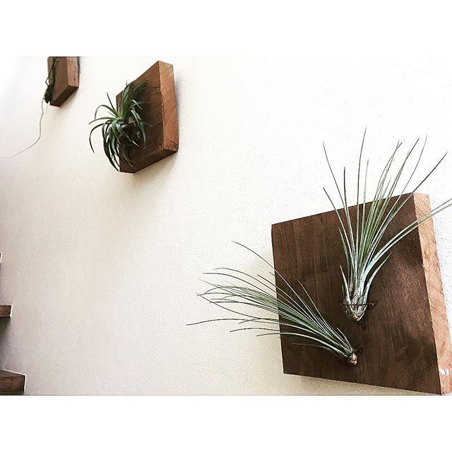 小さい観葉植物42