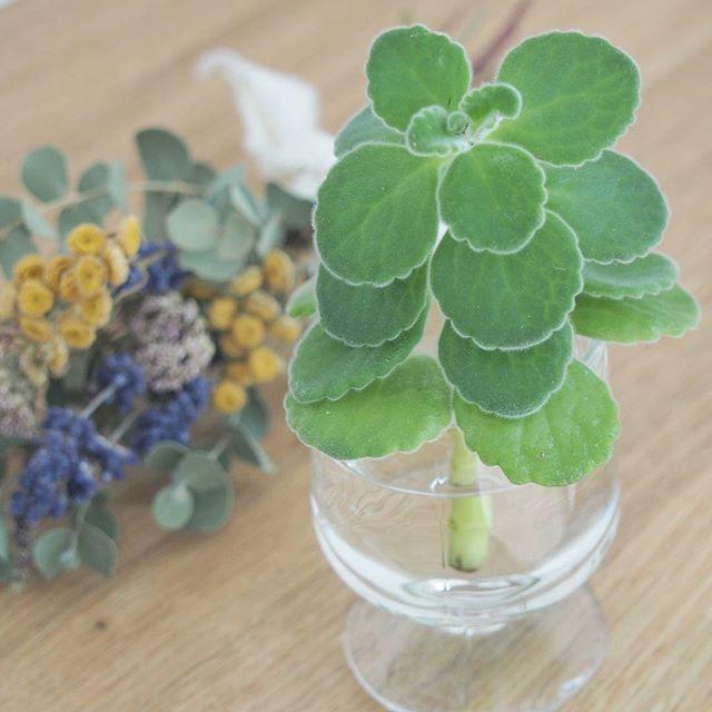 ●エアプランツ・多肉植物4