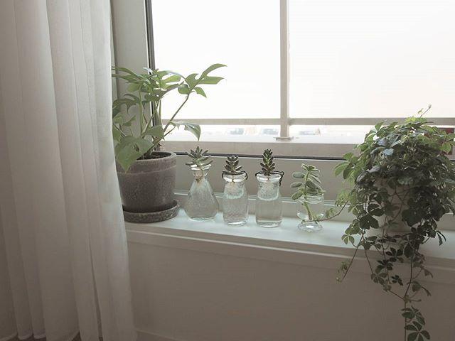 ●エアプランツ・多肉植物3