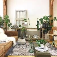 空間の使い方に一工夫♪高低差をつけて植物をおしゃれに飾るアイディア集