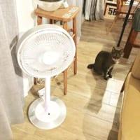 隠さなくても大丈夫!見せたくなるおしゃれなエアコン・扇風機をご紹介