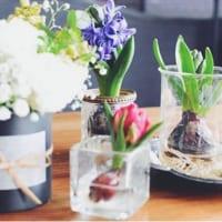 水耕栽培で育ててみよう☆ヒヤシンス・アボカド・多肉植物など一挙にご紹介します!