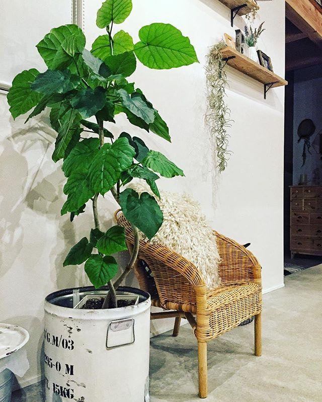 観葉植物特集17