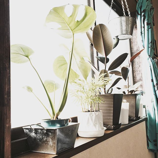 観葉植物特集8