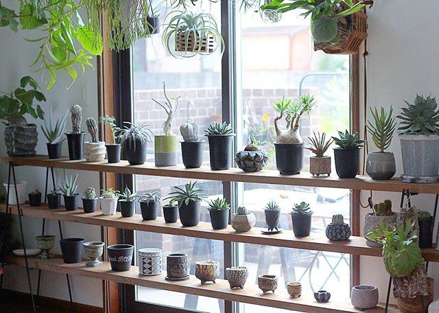 観葉植物特集46