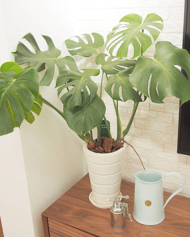 観葉植物特集25