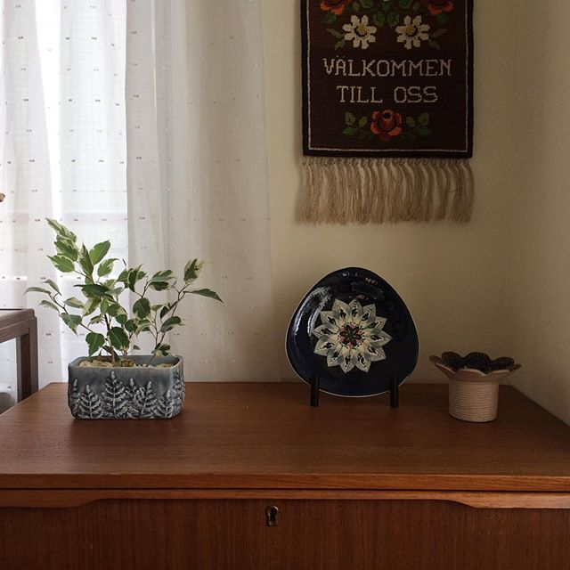 観葉植物特集5