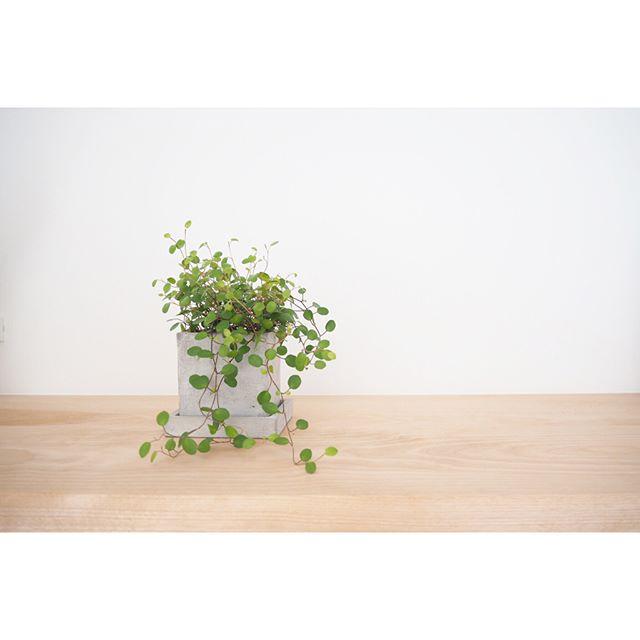 観葉植物特集13