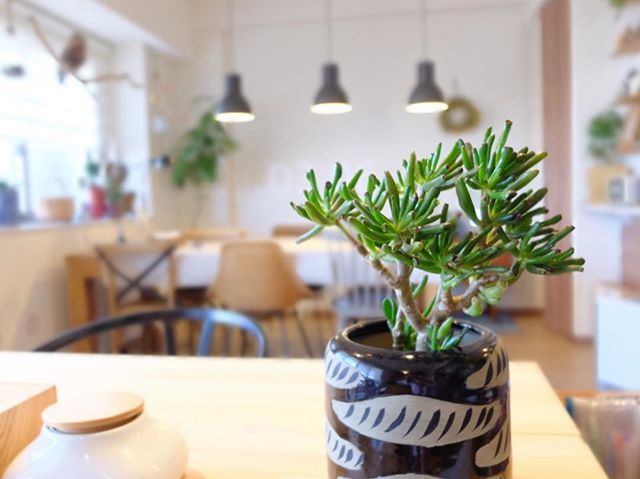 観葉植物特集16